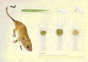illustraciencia_ilustracioncientifica